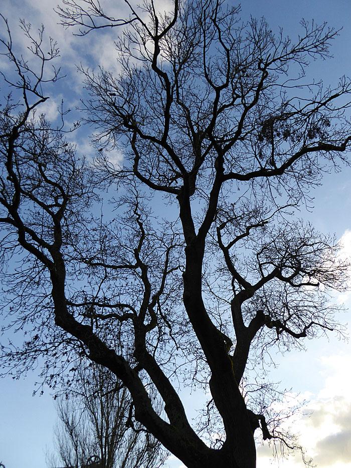 Foto van kale boom tegen blauwe lucht