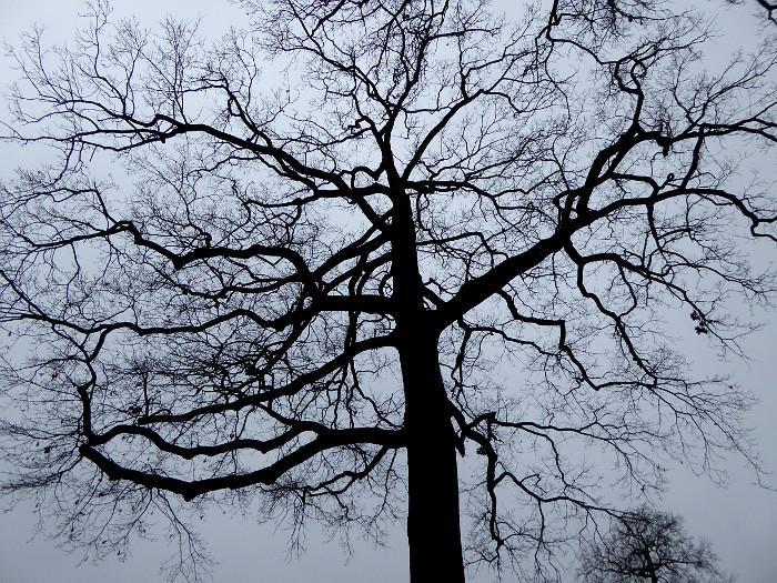 Foto van kale boom