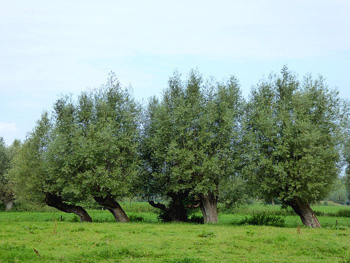 Foto van scheef staande bomen