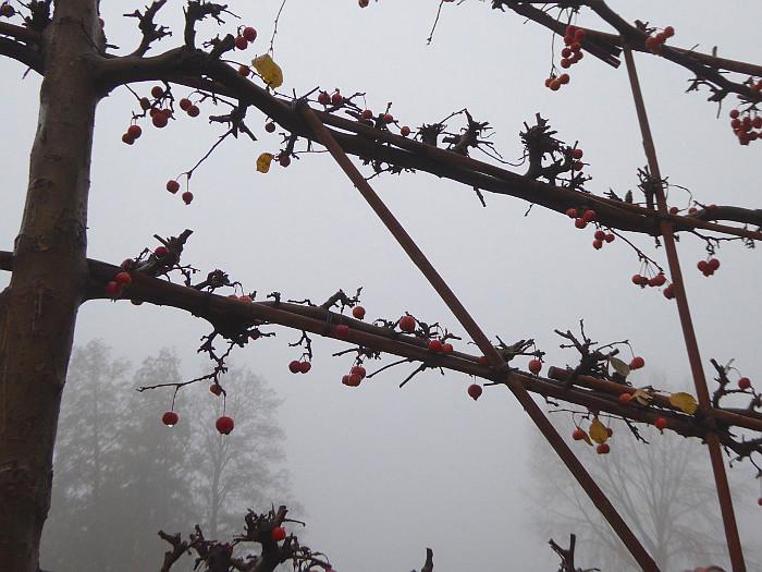 Foto van kale takken met vruchtjes