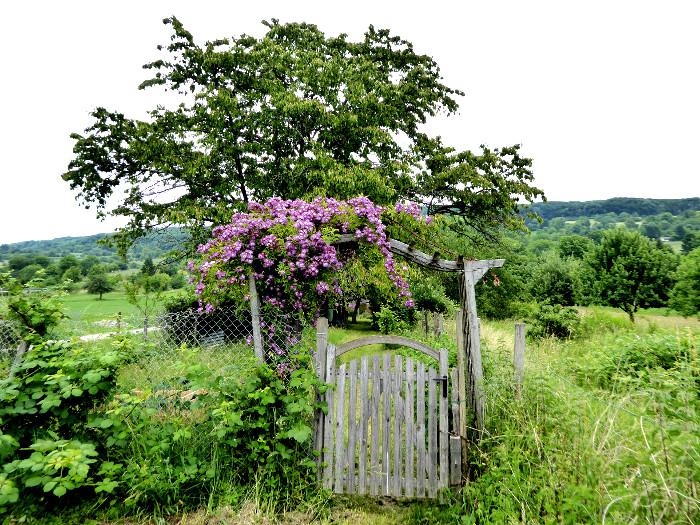 Foto van tuinhek tussen groen