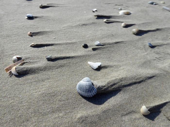 Foto van schelpen op strand