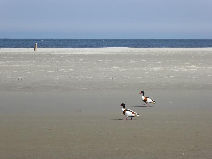Foto van eenden aan het strand