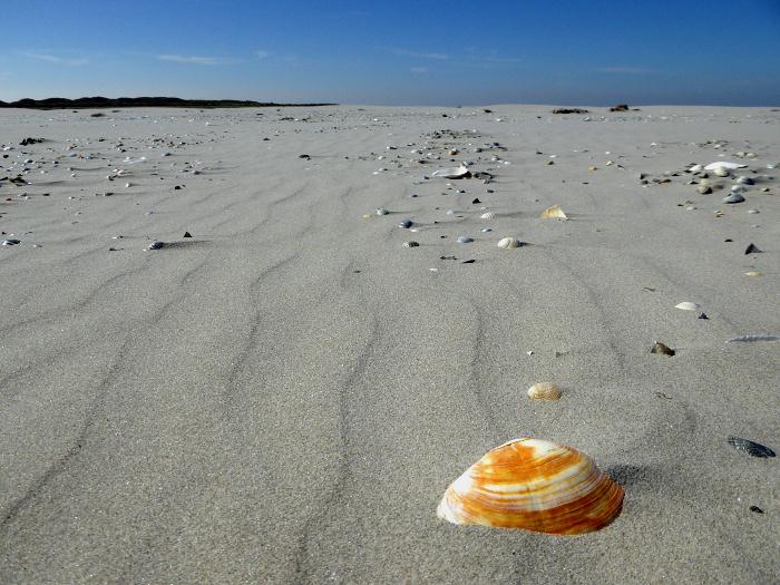 Foto van schelp op strand, blauwe lucht