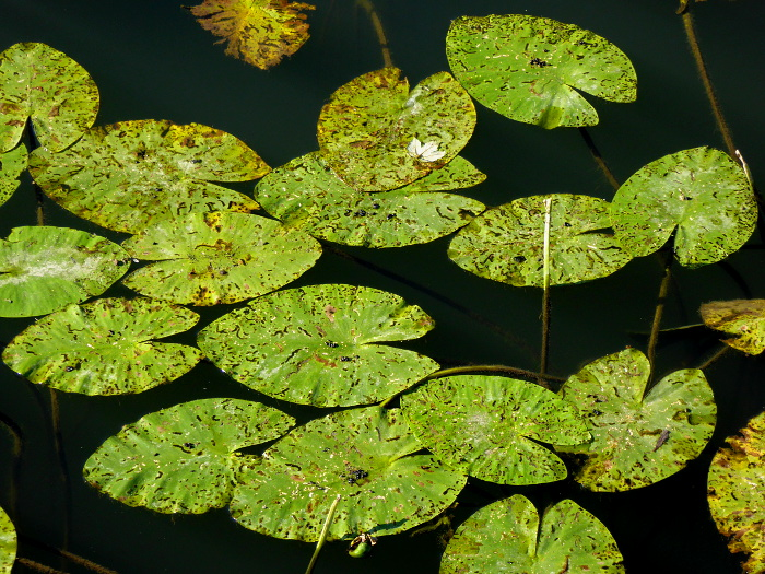 Foto van groene bladeren op water