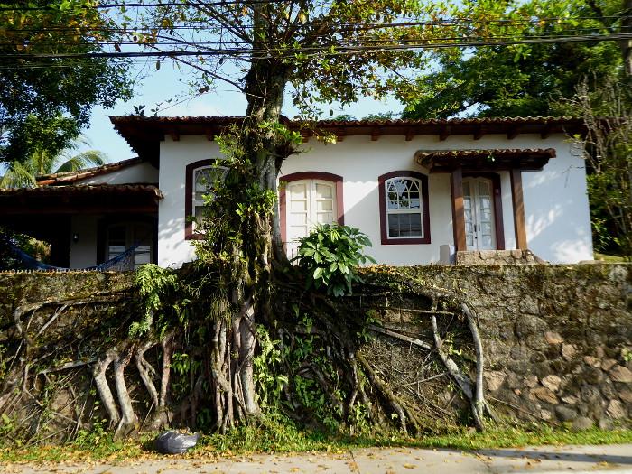 Foto van boomwortels tegen muur