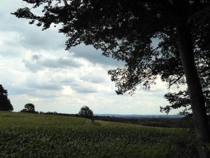 Foto van lanschap met boom en wolken