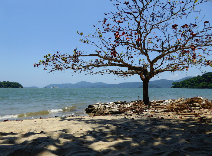 Foto van boom op strand