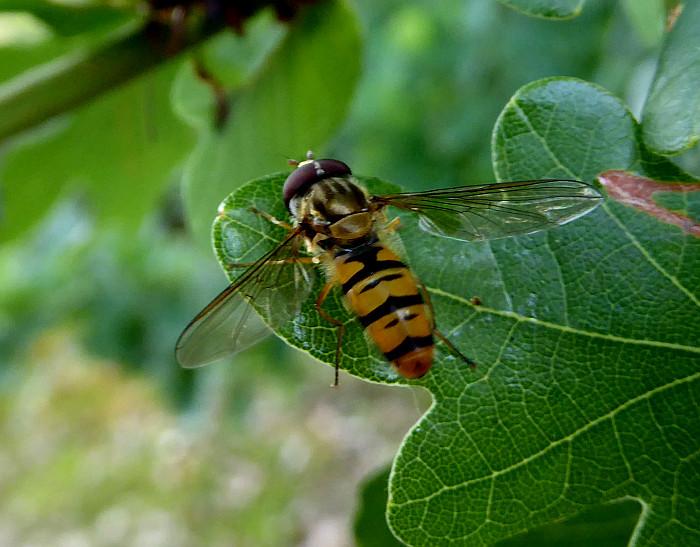 Foto van insect op groen blad