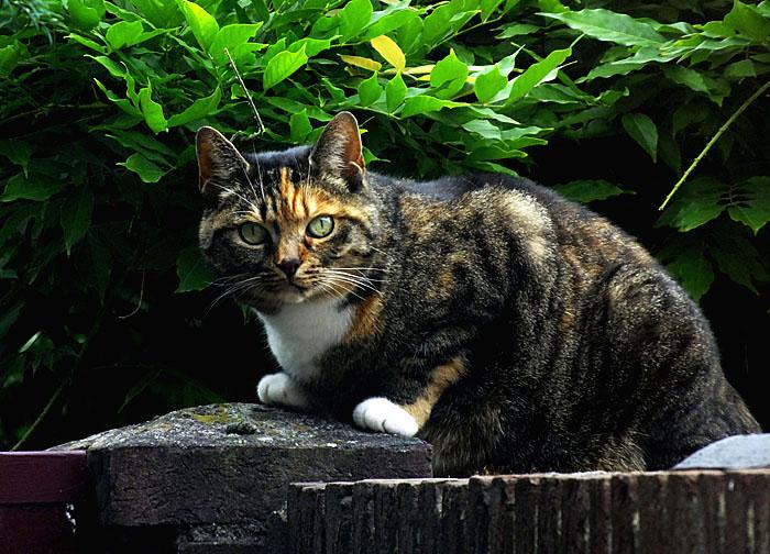 Foto van kat op muur