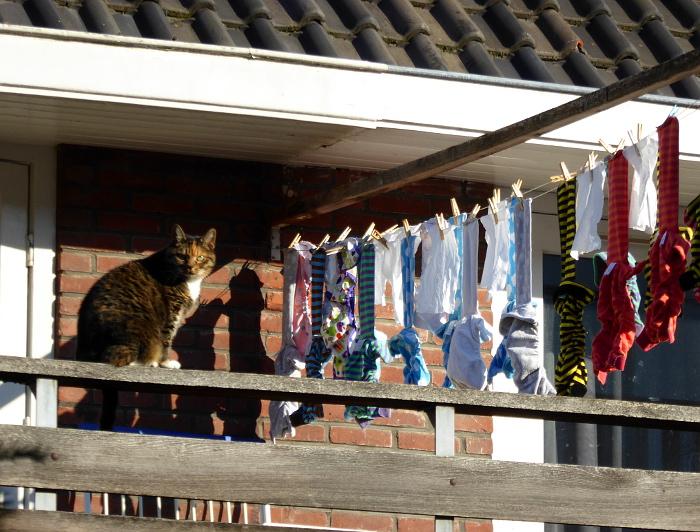 Foto van kat en wasgoed
