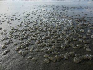 Foto van kwalletjes op strand