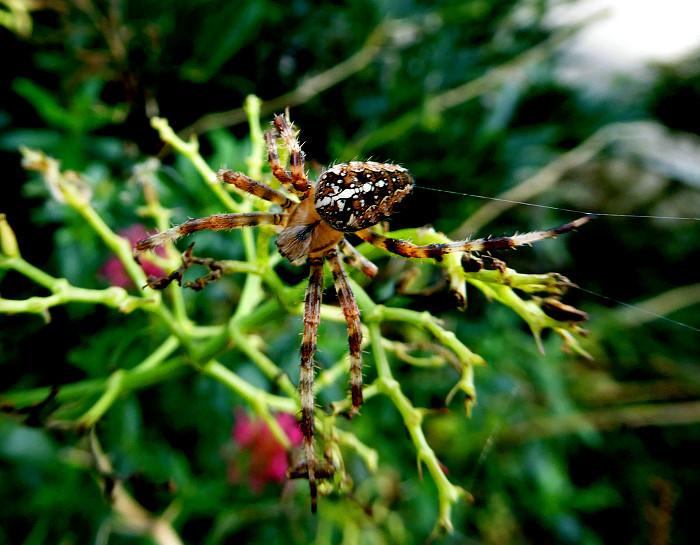 Foto van spin op plant