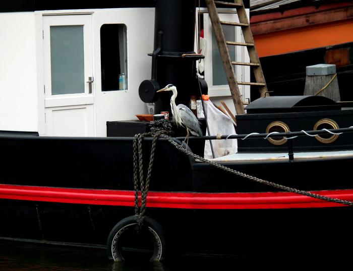 Foto van reiger op rand van boot