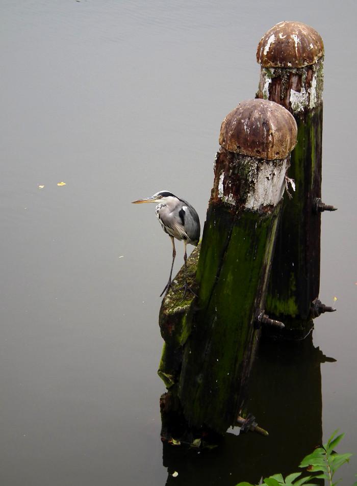 Foto van reiger op meerpaal