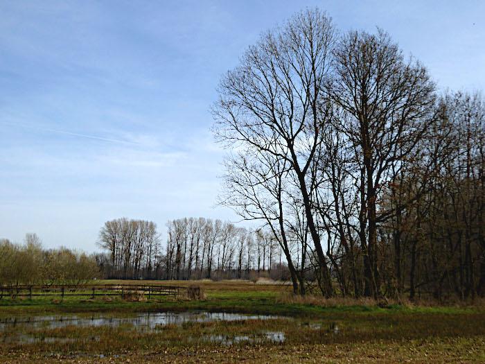 Foto van vennetje en bomen