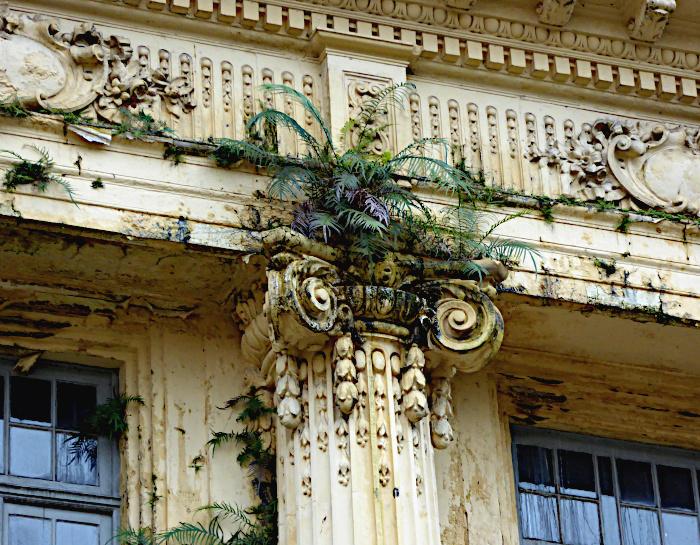 Foto van plantengroei op gebouw