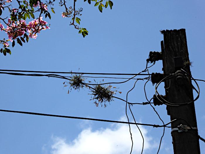Foto van planten in elektriciteitsdraden