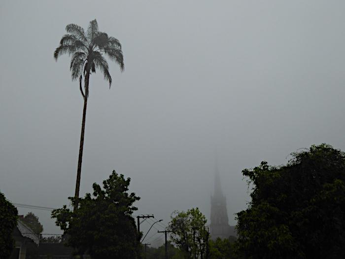 Foto van een palmboom in de mist