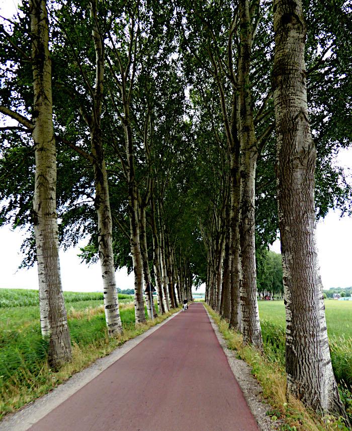 Foto van weg met bomen