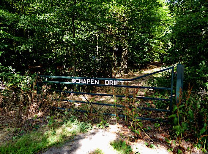 Foto van bospad met naam op hek