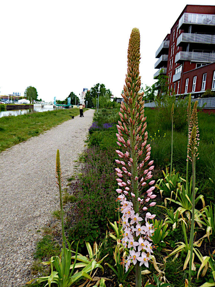 Foto van wandelpad langs kanaal