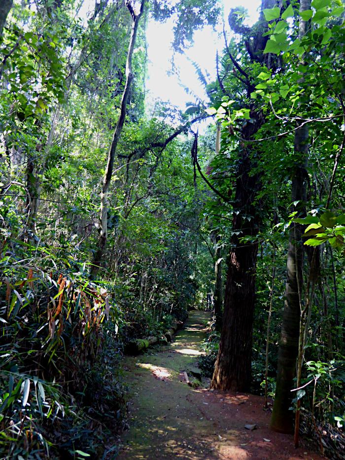 Foto van pad door woud