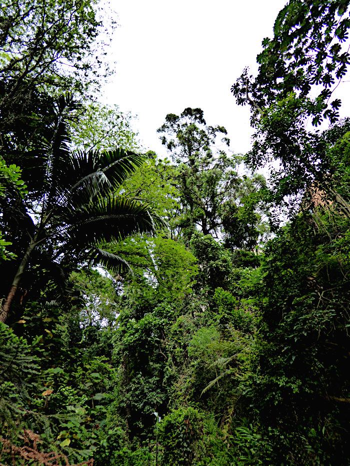 Foto van wildernis
