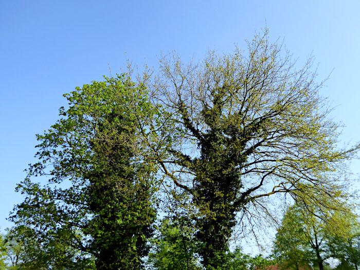 Foto van bomen