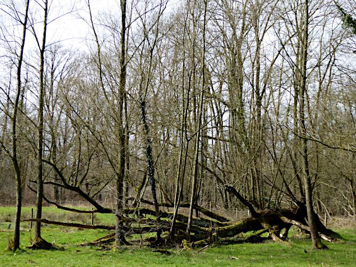 Foto van omgevallen boom