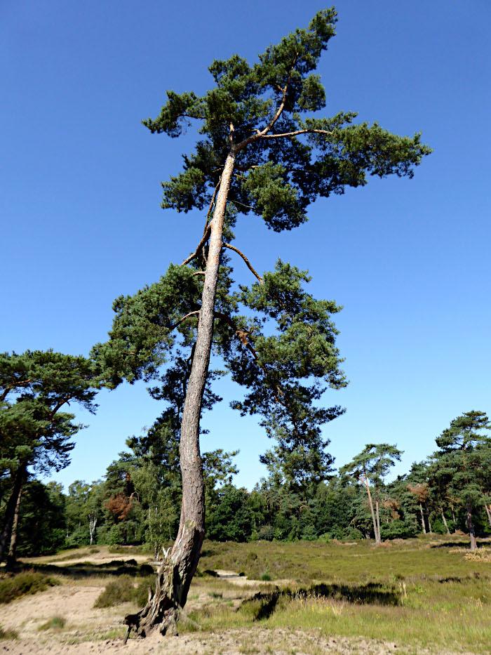Foto van boom