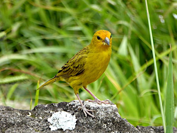 Foto van geel vogeltje