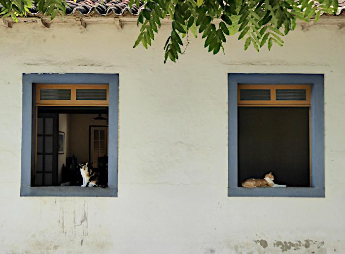 Foto van katten op vensterbank