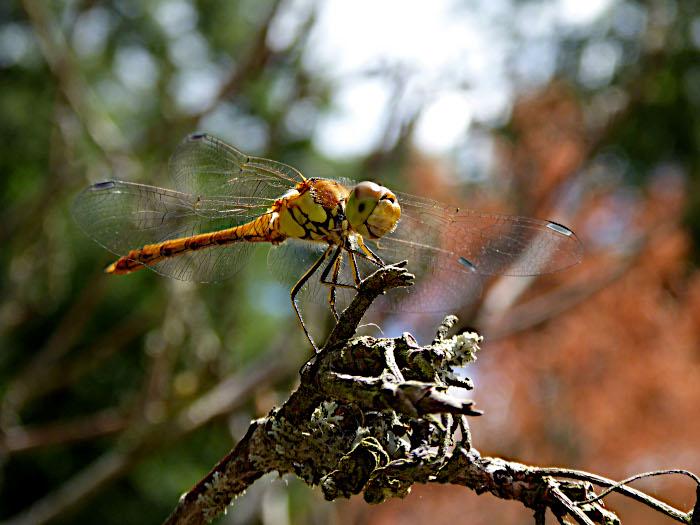 Foto van libelle op tak