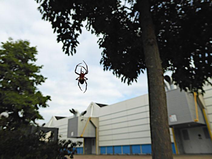Foto van klimmende spin