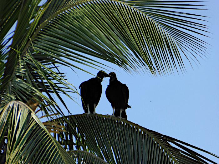 Foto van gieren op palm