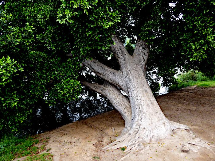 Foto van scheve boom