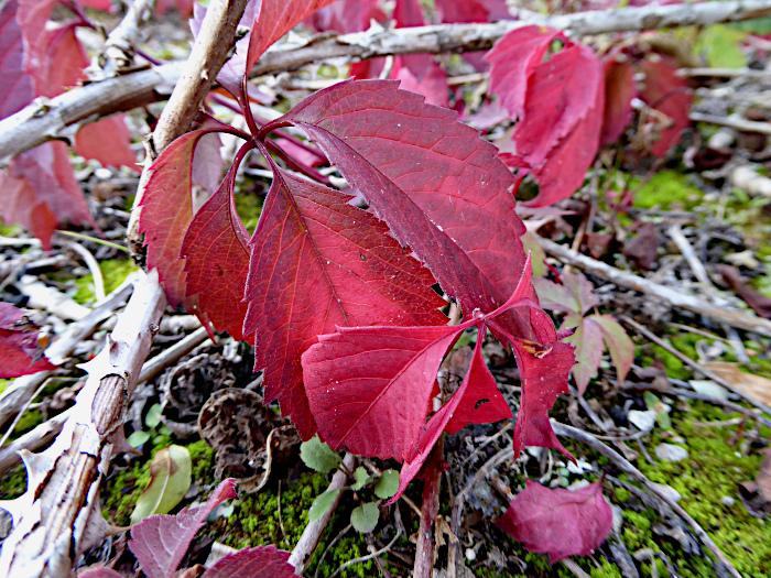 Foto van rode bladeren