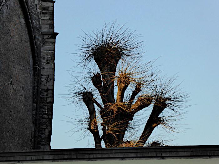 Foto van sprietige boom