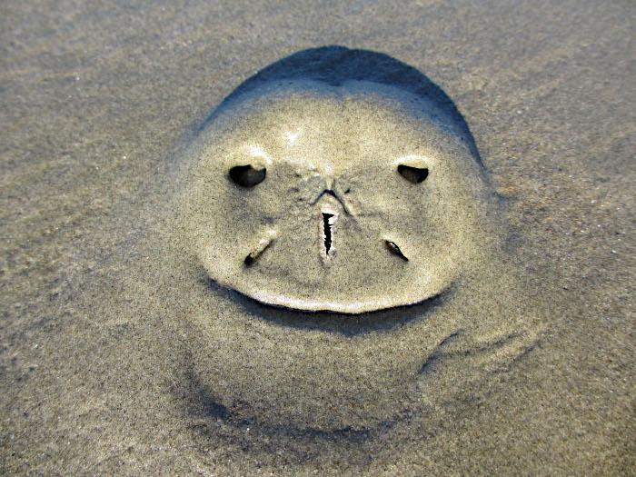 Foto van afdruk in het zand van het strand