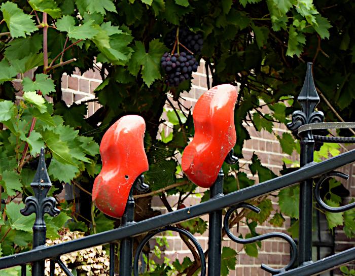 Foto van klompen op hek en druivenranken