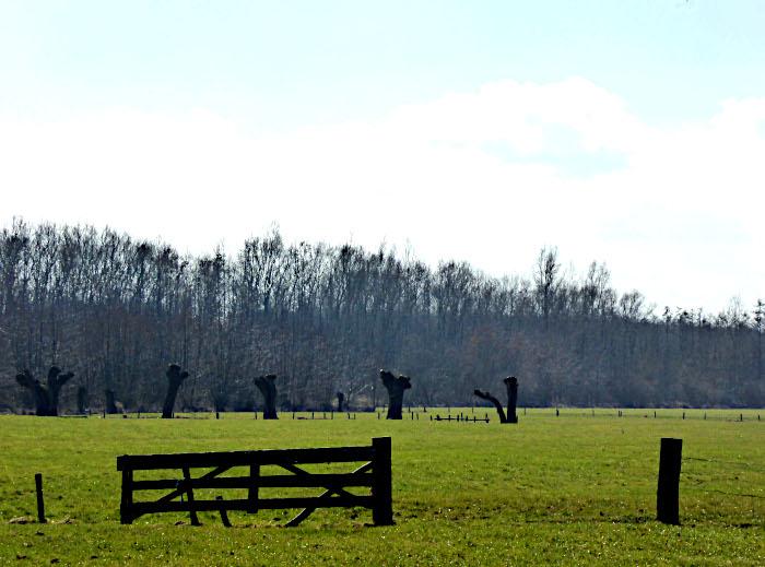 Foto van weiland met houten hek