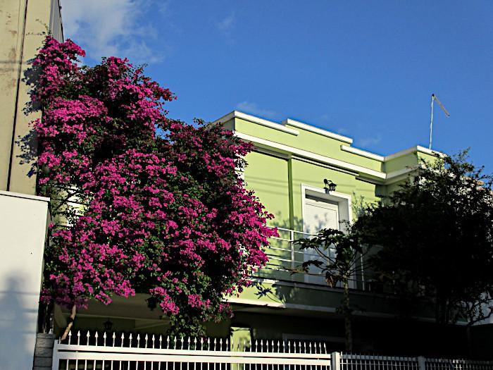 Foto van bougainville bij groen huis