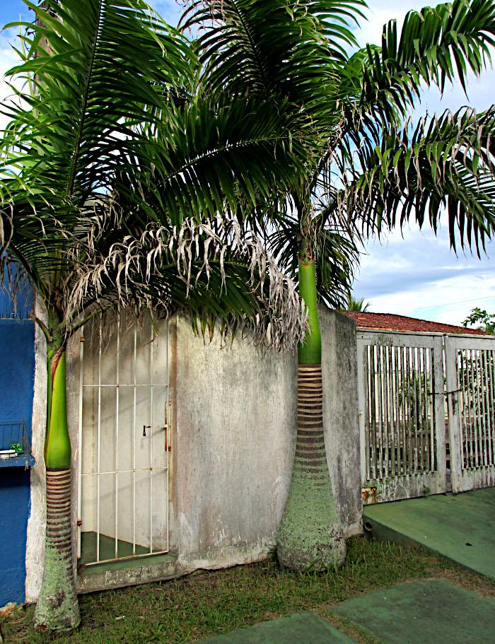 Foto van palmbomen bij muur