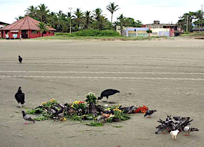Foto van gieren en duiven op het strand