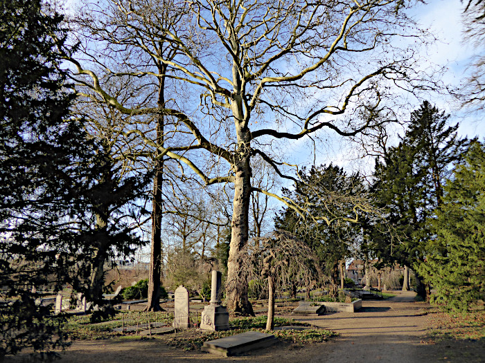 Foto van bomen op begraafplaats