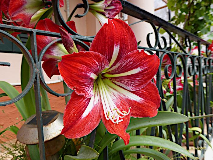 Foto van bloem in hek