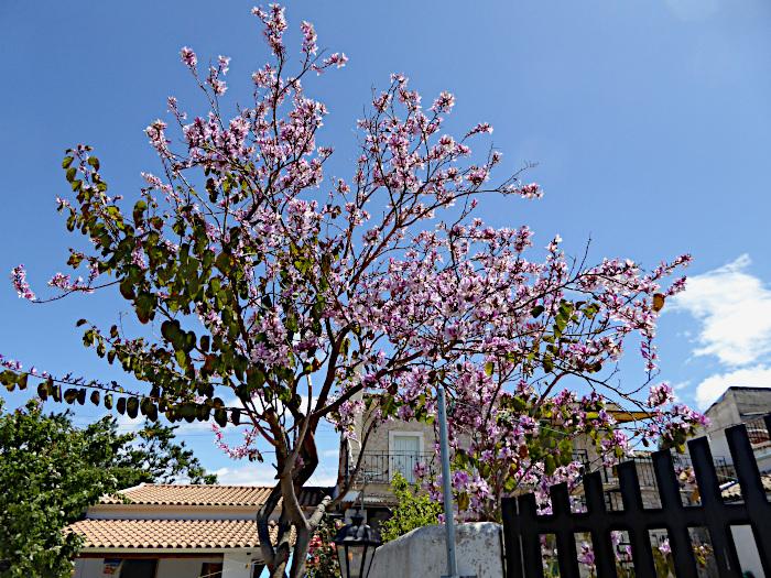 Foto van boom met roze bloesem