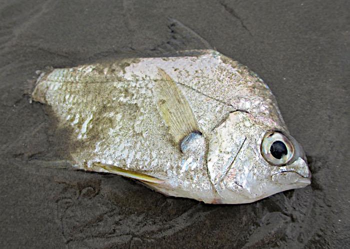 Foto van vis op strand