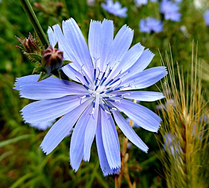 Foto van blauwe bloem